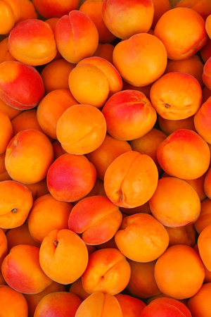 europe closeup: Closeup of freshly harvested ripen Apricots in Europe