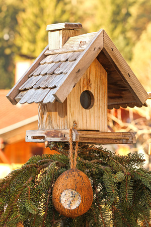 bird feeder: Wooden bird feeder decorated with pine tree branches with a coconut shell suet treats hanging
