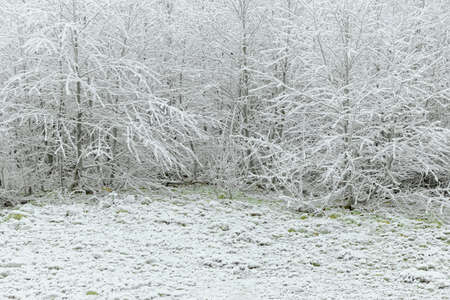 hoarfrost: Trees and the whole area covered with hoarfrost rime, beautiful winter scene