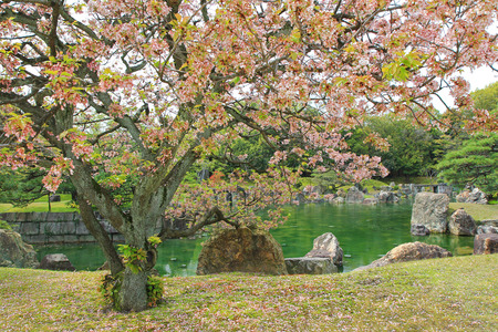 ornamental garden: Sakura blossoming at Ninomaru Garden with ornamental stones in a large pond, traditional Japanese garden of the Nijo Castle during spring in Kyoto, Japan. Stock Photo