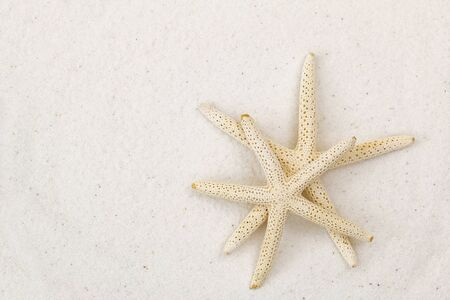 Closeup of two star fish, known as sea stars, on white fine sand beach background with copyspace