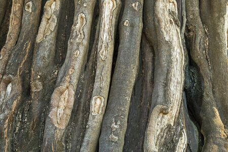 huge tree: Closeup texture photo of old huge tree bark with natural trunk pattern