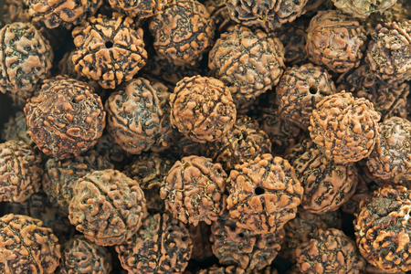 Closeup background texture photo of Rudraksha, seeds from fruit of Elaeocarpus Ganitrus Roxb tree. Representing the tear of fulfillment shed by Shiva once he emerged from a long period of yogic meditation, the scared seeds are used as prayer beads.