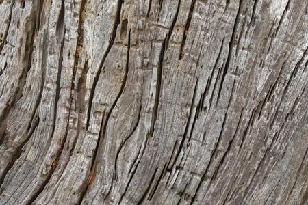 huge tree: Closeup background tree texture photo of huge rustic weathered wood bark with many cracks Stock Photo
