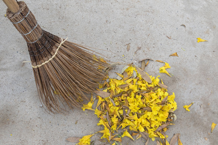 old styled: Old styled broom made of coconut leaf stalks sweeping yellow flowers fallen from Caribbean trumpet tree