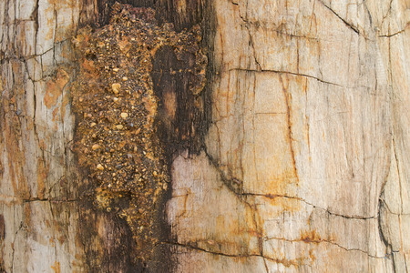 ossified: Closeup background texture photo of petrified ancient wood changing into stone by nature
