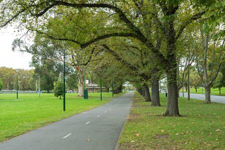 st kilda: Row of big Elm trees and London plane tree along peaceful path at Alexandra Avenue, Melbourne St Kilda Road during Autumn in Melbourne, Australia