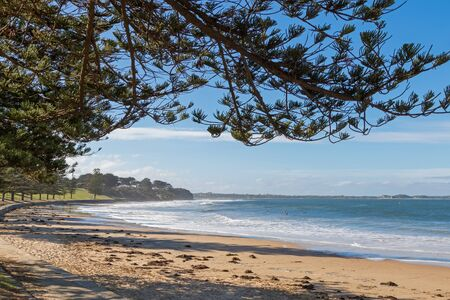 foreshore: View of Torquay surf beach promenade along Norfolk Pine trees on foreshore in Victoria, Australia