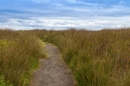 bushwalk: Natural walking path across tall button grass and other creeping ground cover plants at Cape Nelson Conservation reserve at at Cape Bridgewater in Victoria, Australia