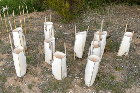 covering: Sleeve made of wooden sticks and plastic. Simple and inexpensive way to cover and protect young tree saplings from wind desiccation and pest in Australia.