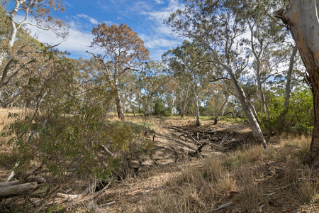 stoney point: Very dried out area of the Mosquito Creek line at Naracoorte forest during Autumn in South Australia