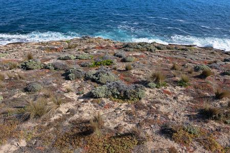 kangaroo island: Salt tolerant plants and grass growing on south-west coast, part of Flinders Chase National Park on Kangaroo Island, South Australia Stock Photo