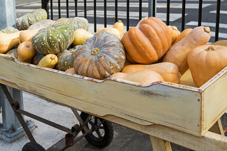 cinderella pumpkin: Large freshly harvested Japanese pumpkin, Golden nugget, butternut, winter squash variety in a wooden box during Autumn in Hahndorf, South Australia Stock Photo