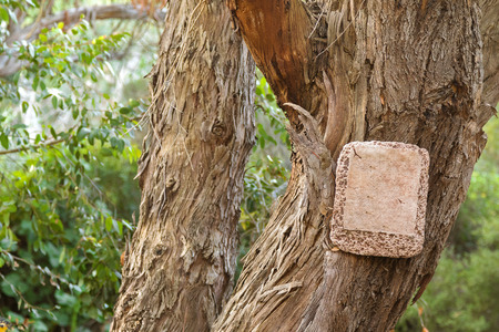 bark peeling from tree: Blank stone sign hanging on dried tree with bark peeling off and blurred tree background