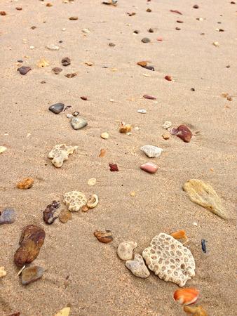 brain coral: Sand on the beach full of seashells, stone, brain coral. Thailand, Asia Stock Photo