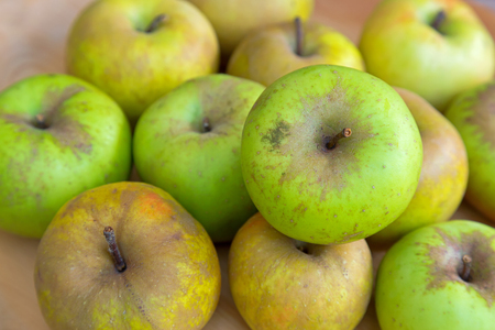 unconventionally: Selective focus of Imperfect looking organic Belle de Boskoop apples with unconventionally raised method, no genetically modified organism techniques Stock Photo