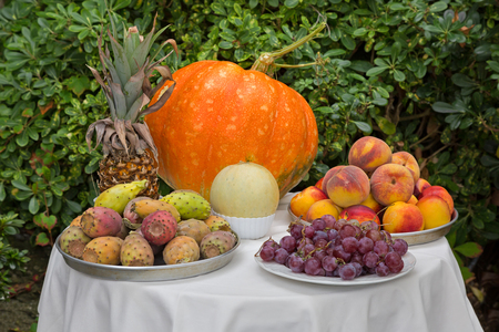 Table full of harvested fruit - pineapple pumpkin melon grapes peach nectarines, Indian Fig