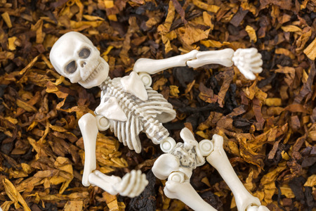 White skeleton dead body bones resting on top of classic blended aromatic pipe tobacco
