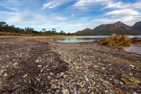 Kelps, seaweeds, seashells washed up on Freycinet national park beach with view of Hazards mountain range, view from Coles Bay in East coast of Tasmania, Australia