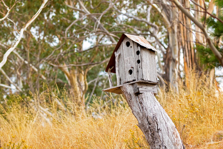 surrounded: Simple wooden bird house on top of tree stump surrounded with yellow grass meadow field, Autumn in Tasmania, Australia