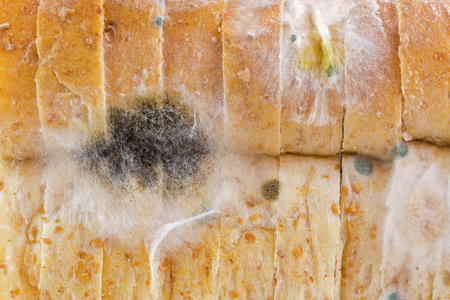 Closeup texture of black yellow blue white molds on molded old wholewheat bread 版權商用圖片