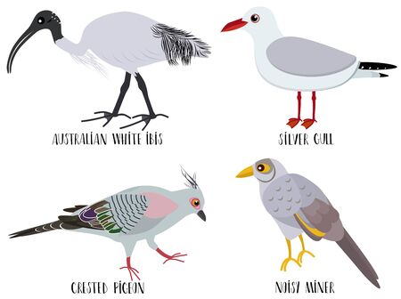 Vector illustration of cute bird cartoons - Australian white ibis, silver gull, crested pigeon, noisy miner Stock Photo