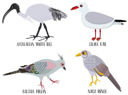 Vector illustration of cute bird cartoons - Australian white ibis, silver gull, crested pigeon, noisy miner