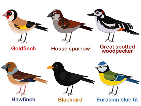 Vector illustration set of cute European bird cartoons - goldfinch, house sparrow, great spotted woodpecker, hawfinch, blackbird, blue tit. Иллюстрация