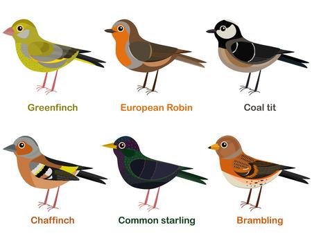 Vector illustration set of cute European bird cartoons