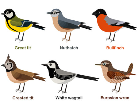 Vector illustration set of cute European bird cartoons
