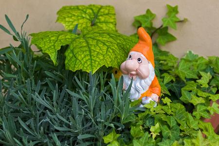 Garden gnome dwarf with white beard, orange pointy hat in a pot of Ivy. Ornament figurine in garden 스톡 콘텐츠