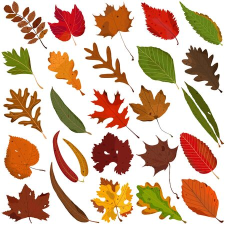 Hand drawn Autumn leaf, colorful illustration vector of orange red green leaves doodle elements on white
