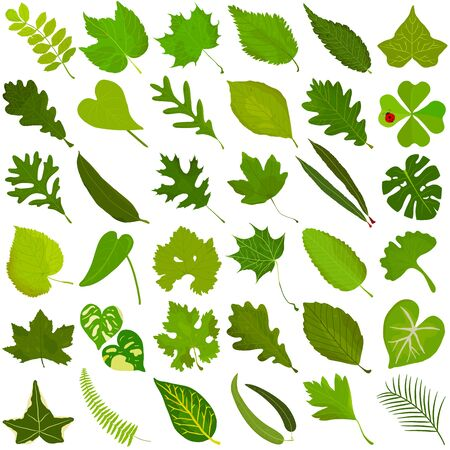Hand drawn Summer green leaf, colorful illustration vector of green leaves doodle elements on white 矢量图像