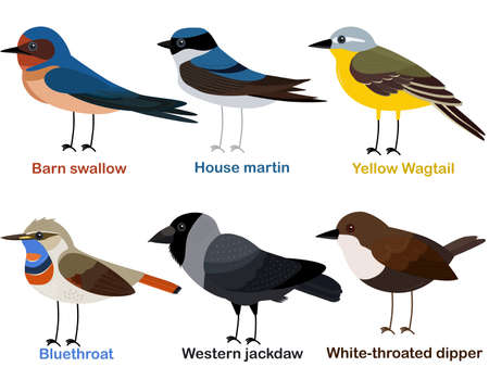 Cute bird vector illustration set, Barn swallow, House martin, Yellow Wagtail, Bluethroat, Western jackdaw, White throated dipper, Colorful European bird cartoon collection