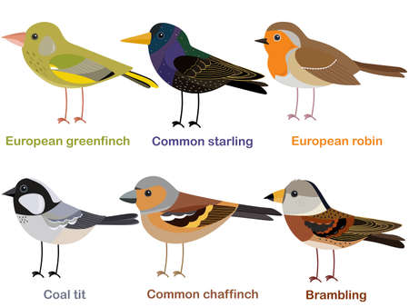 Cute bird vector illustration set, Greenfinch, Robin, Starling, Chaffinch, Coal tit, Brambling, Colorful European bird cartoon collection