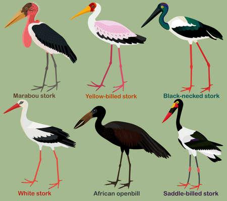 Cute wading bird vector illustration set, Black-necked stork, Yellow-billed, Saddle-billed, African openbill, Marabou, White stork, Colorful bird cartoon collection