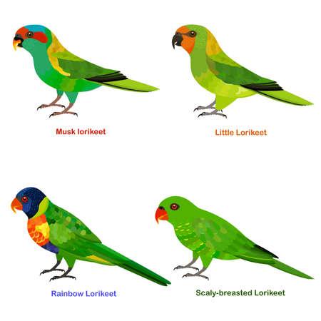 Cute Australia Lorikeet, parrot bird vector illustration set, Rainbow Lorikeet, Little Lorikeet, Scaly-breasted, Musk lorikeet, Colorful bird cartoon collection Ilustración de vector