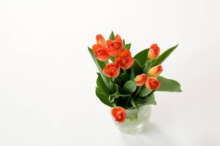 beautiful orange tulips in a vase on a white background