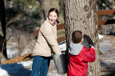 sap: two children looking in a sap bucket at a sugar bush