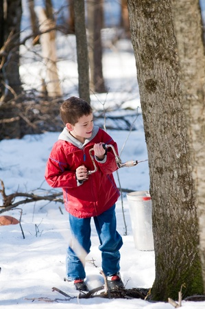 tapping: young boy using a hand drill to tap a maple tree