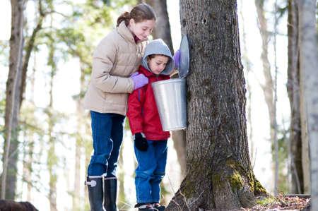 砂糖ブッシュで sap バケツで探している 2 人の子供
