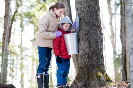 maple syrup: two children looking in a sap bucket at a sugar bush