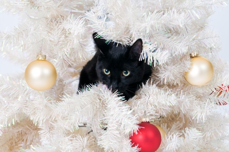 misbehaving: black cat in a christmas tree