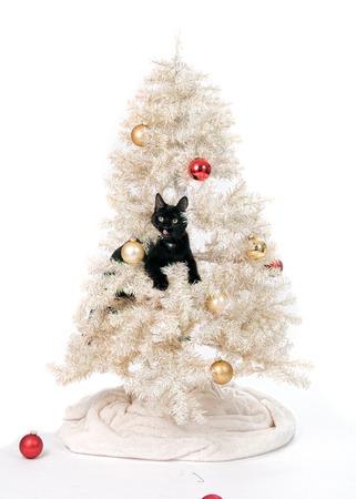 クリスマス ツリーに黒い猫