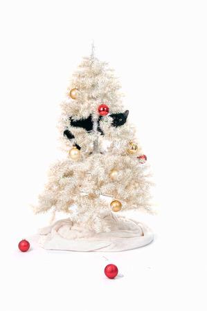 クリスマス ツリーの黒い猫