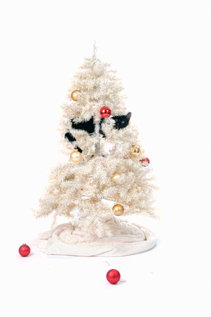 black cat in a christmas tree Stock Photo - 22290627