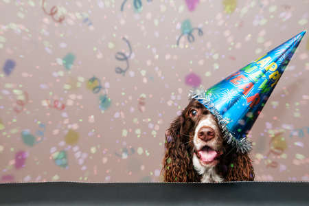 gelukkige hond het dragen van een nieuw jaar feest hoed met confetti vallen