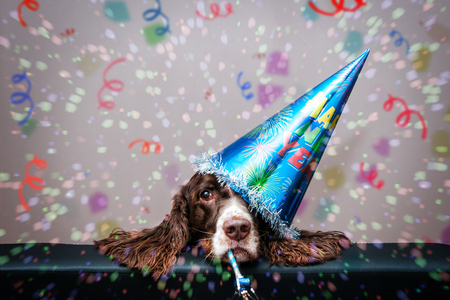 new look: grumpy new year dog wearing a party hat and blowing a party blower Stock Photo