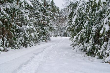 snow covered forest: snowshoe trail through a snow covered forest