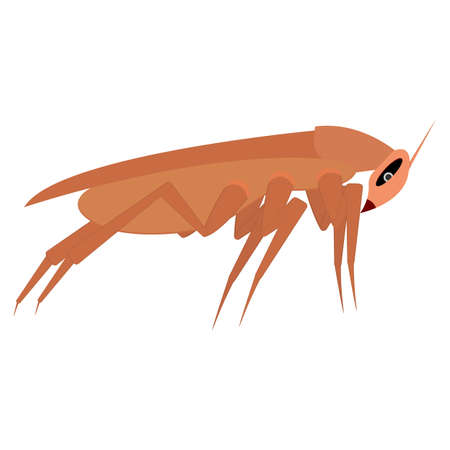 Brown long cockroach. Side view. Template, part for design. Isolated vector illustration on white background. Illustration